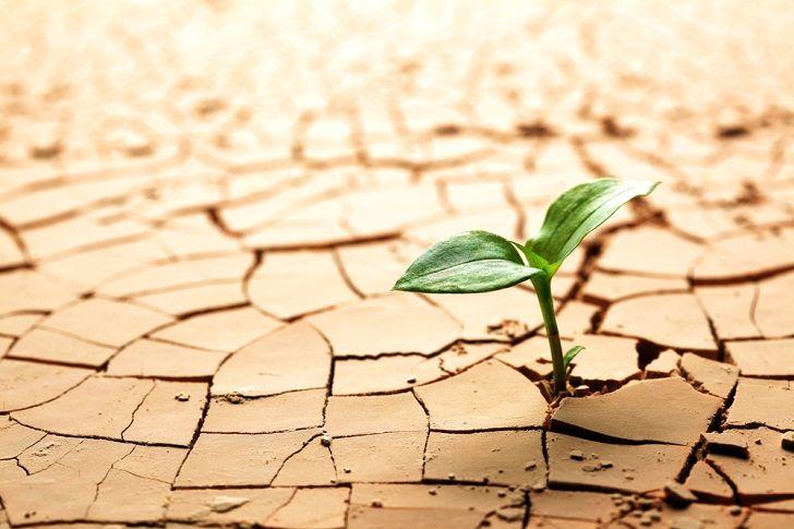การปฏิบัติการเกษตรในภาคอุตสาหกรรมที่ไม่ยั่งยืนช่วยชะลอการพังทลายของดินและ …