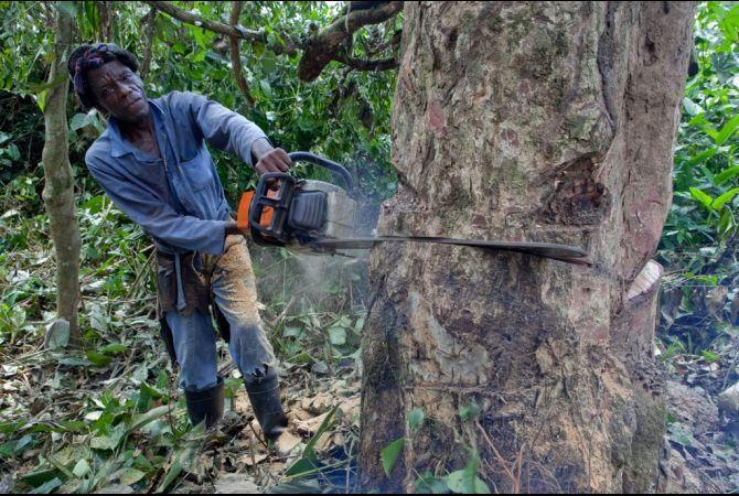 การตัดไม้ทำลายป่า – www.environment.c …